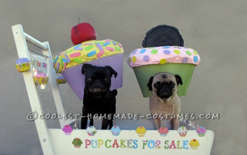 pupcakes for sale