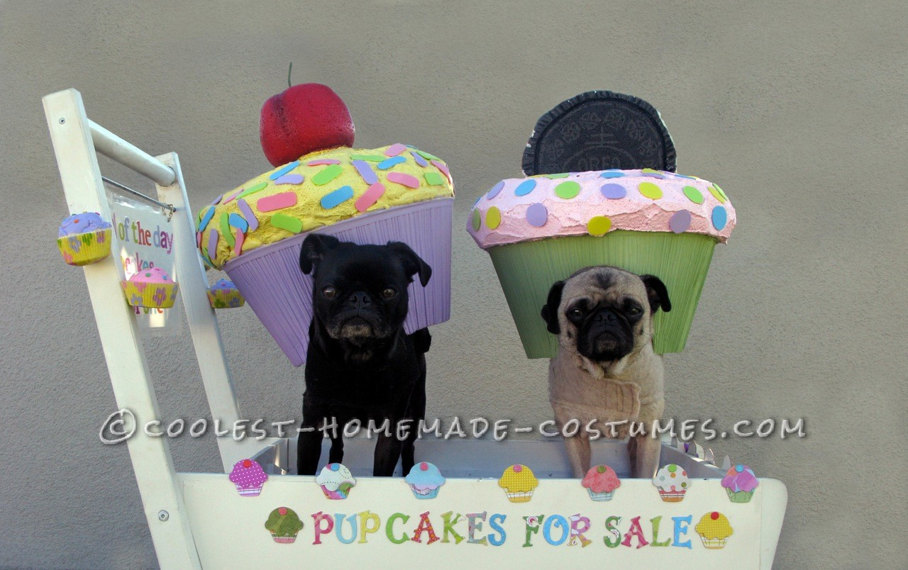 Step by Step Recipe for Making Pup Cakes! (Cup Cake Costume for Your Dog)