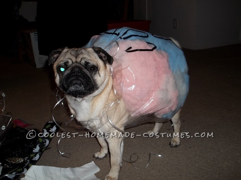 Coolest Cotton Candy Dog Costume Idea - 2