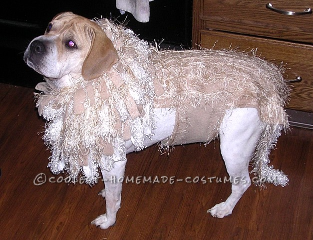 DIY Lion Costume http://ideas.coolest-homemade-costumes.com/2012/10/02/cutest-homemade-lion-costume-dog-tank/