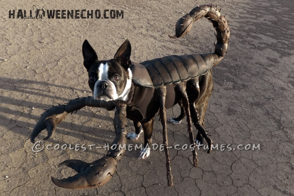 Cool Homemade Costume Idea for Your Dog: Echo the Scorpion