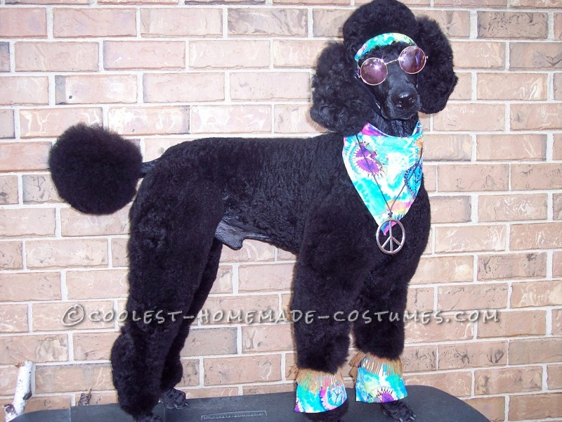 Great Pet Dog Halloween Costume: Howl-O-Hippie - 1