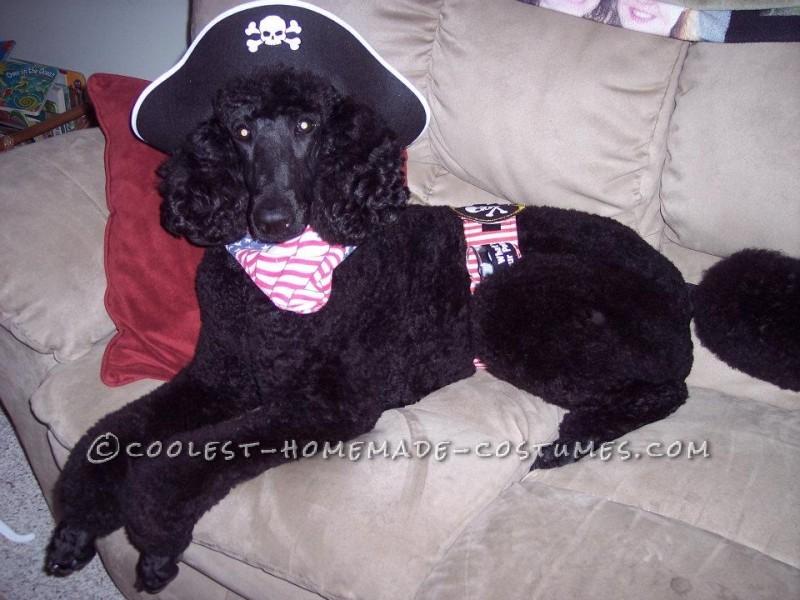 Easy to Make Pirate Dog Costume