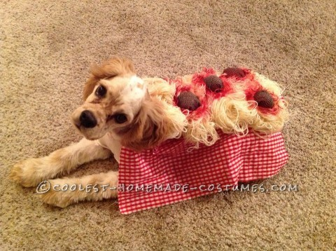 Ok, so I thought hmm, spaghetti and meatballs costume for a cocker spaniel? Adorable! Especially since it reminds me of the famous spaghetti scene in