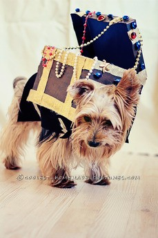 Original Treasure Chest Dog Costume Idea