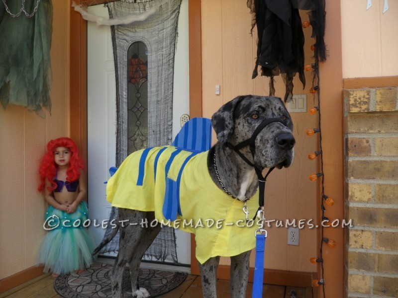 Homemade Flounder Costume for a Dog