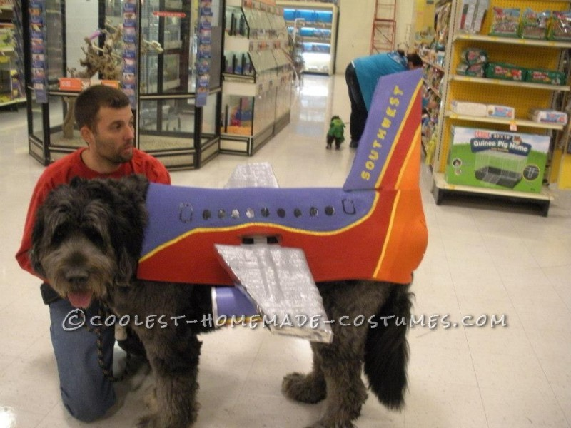 The plane having to dress up by himself for a dog costume contest where he came in 2nd place