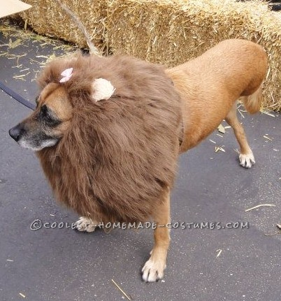 The Very Best 3-Legged Lioness - Pet Dog Costume!