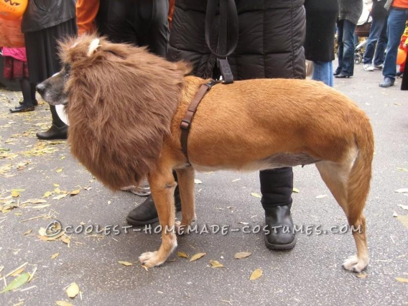 The Very Best 3-Legged Lioness - Pet Dog Costume!