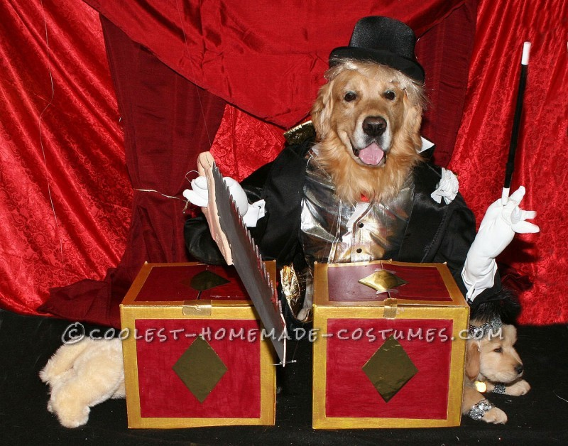 Coolest Homemade Couple Costume for Pet Dogs: Magician Sawing Assistant in Half