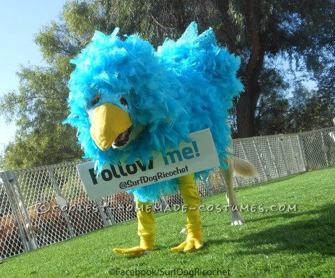 Twitter Critter Costume for a Large (and Patient) Dog