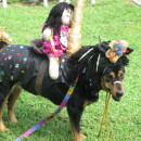Funny Carousel Horse Costume for a Dog