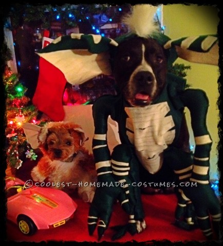 Cool Homemade Pet Dogs Costumes: Gremlins!