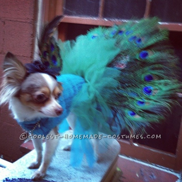 Coolest Homemade Peacock Costume for Pet Dog