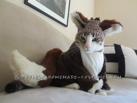 Cool Costume for My Cat: Pecan the Fox