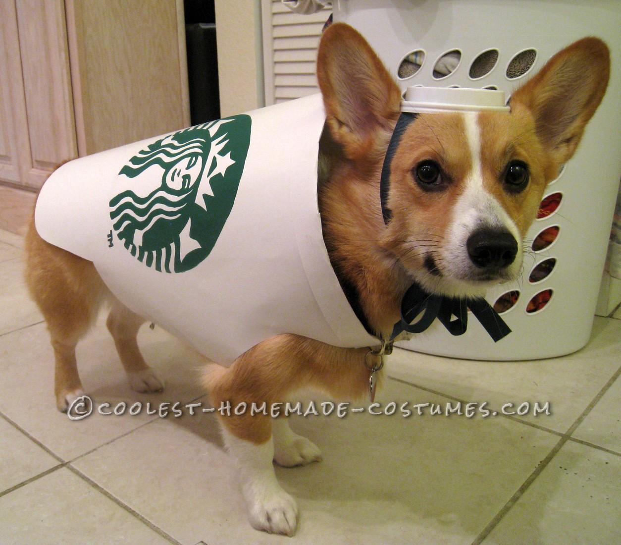 Starbucks Dog Costume - Easy and Inexpensive