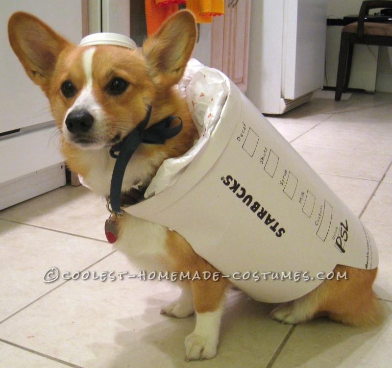 Starbucks Dog Costume – Easy and Inexpensive - 1
