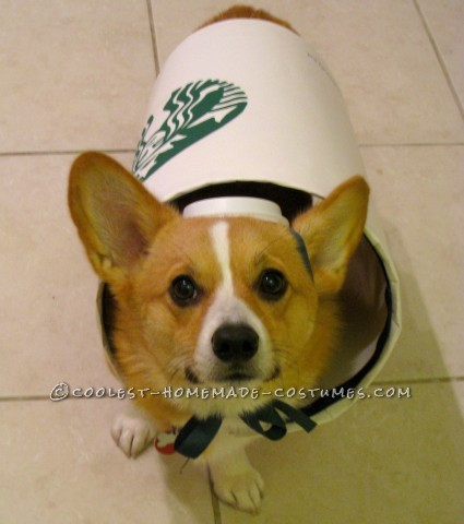Starbucks Dog Costume - Easy and Inexpensive