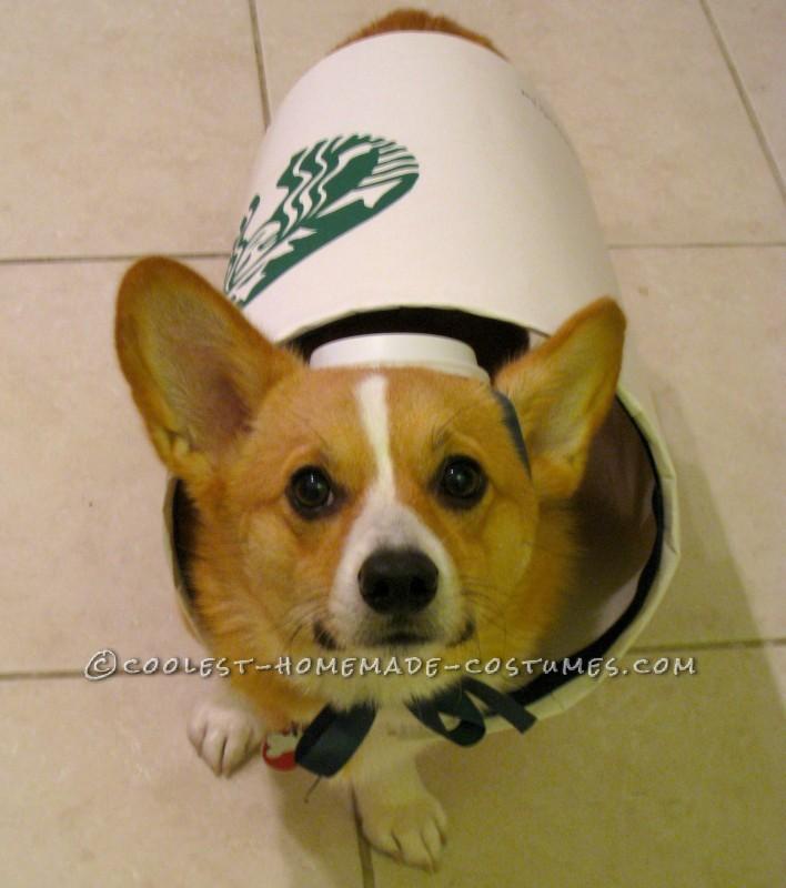 Starbucks Dog Costume – Easy and Inexpensive - 2