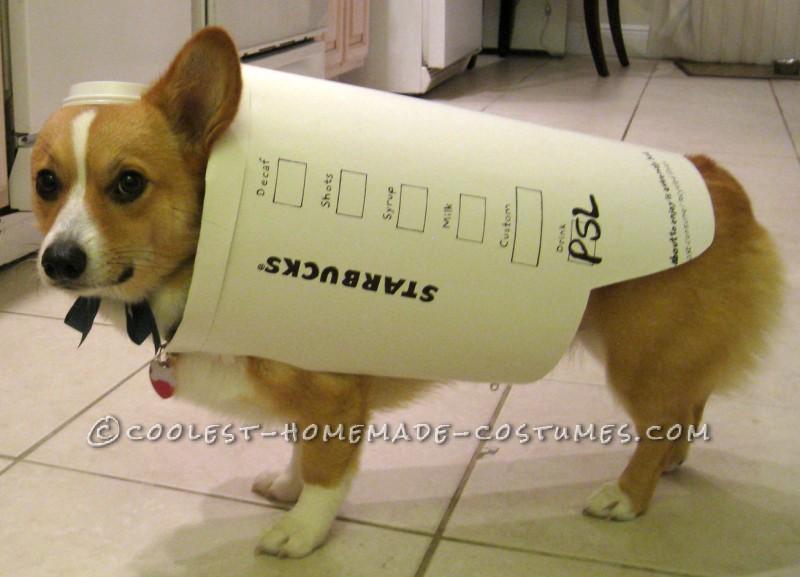 Starbucks Dog Costume – Easy and Inexpensive - 3