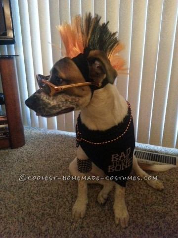 Cool Pet Dog Costume: Sully the Pupster of Halloween