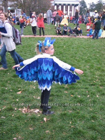 Little Chicken and Blue Bird Costumes for Brother and Sister