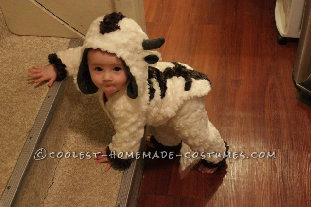 Baby Appa Climbing the stairs