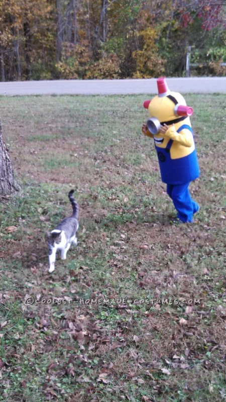 The chasing of Koko the cat.