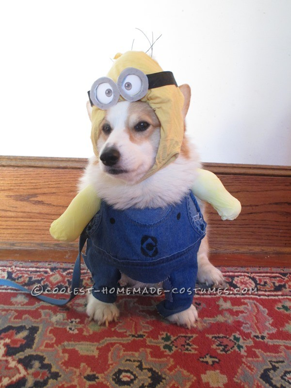 Bonnie's Crazy Minion Dog Costume