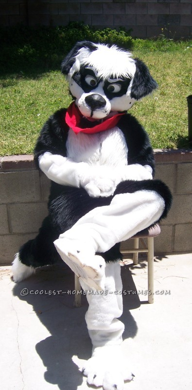Cool Homemade Border Collie Dog Costume - 2