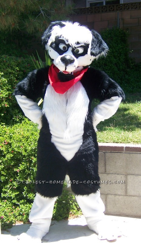 Cool Homemade Border Collie Dog Costume - 1