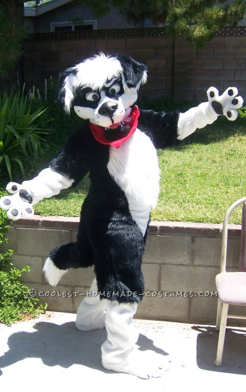 Cool Homemade Border Collie Dog Costume - 3