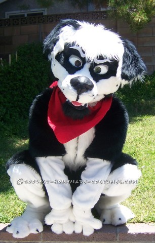 Cool Homemade Border Collie Dog Costume