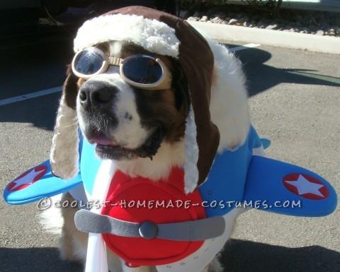 Saint Bernard Dog Costume: Captain America to the Rescue!