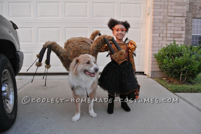 Pet Dog Spider Costume and Toddler Spider Princess