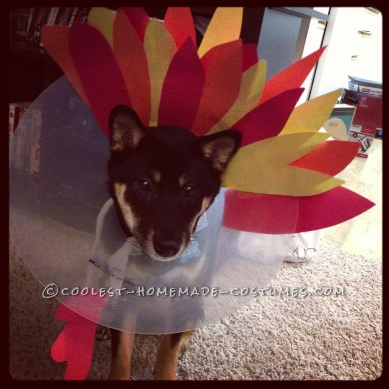 Turkey Dog Costume: Recovering Puppies Can Be Festive Too!