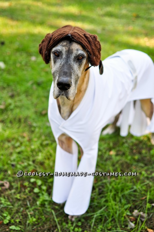 Star Wars Dog Costumes: The Canines Strike Back - 5