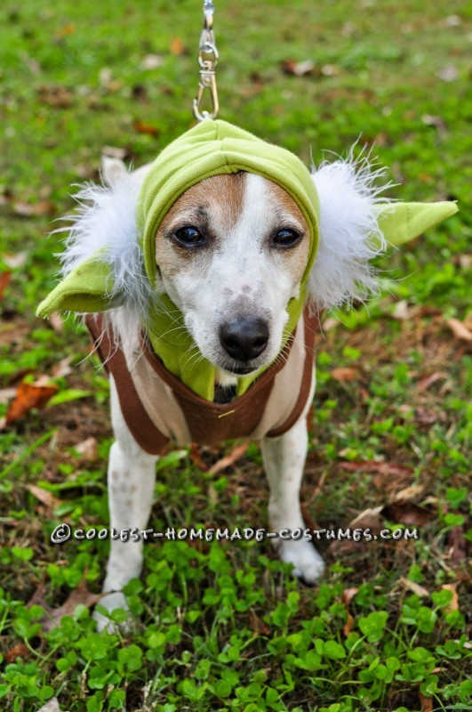 Star Wars Dog Costumes: The Canines Strike Back - 8