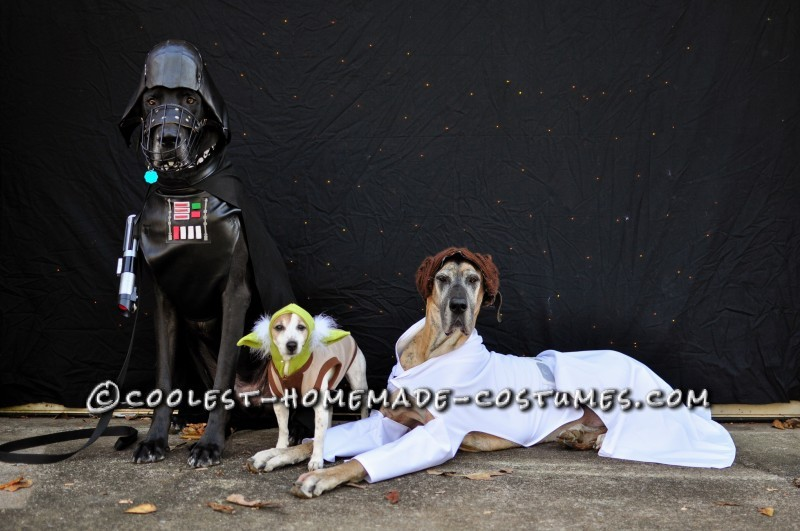 "Star Wars pups...with my crappy attempt at a ""star"" background lol"