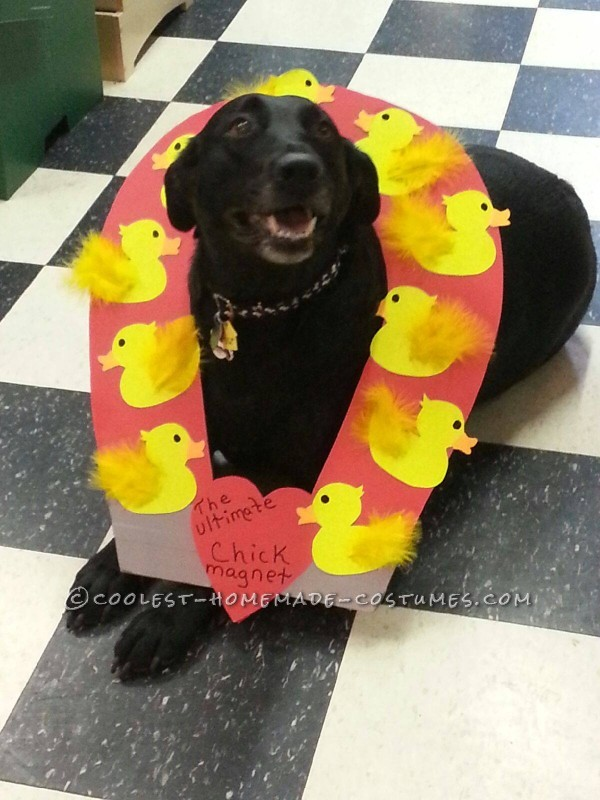 Funny Dog Costume Idea: Chick Magnet