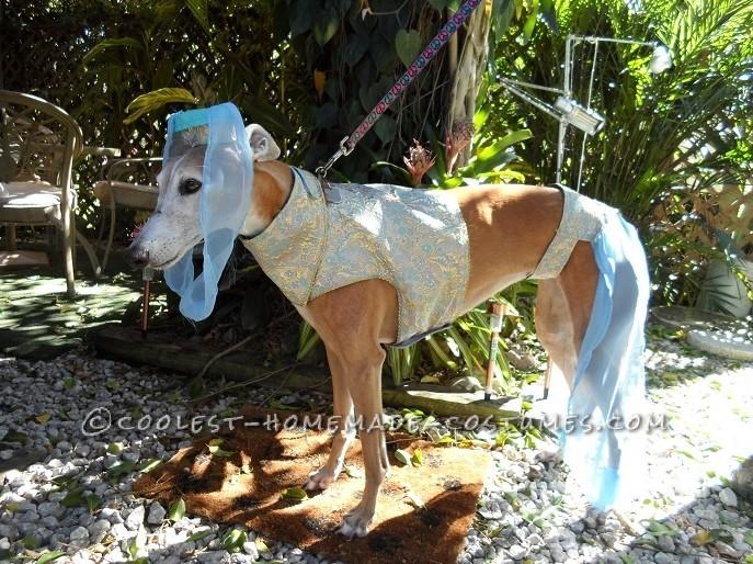 My Greyhound Genie