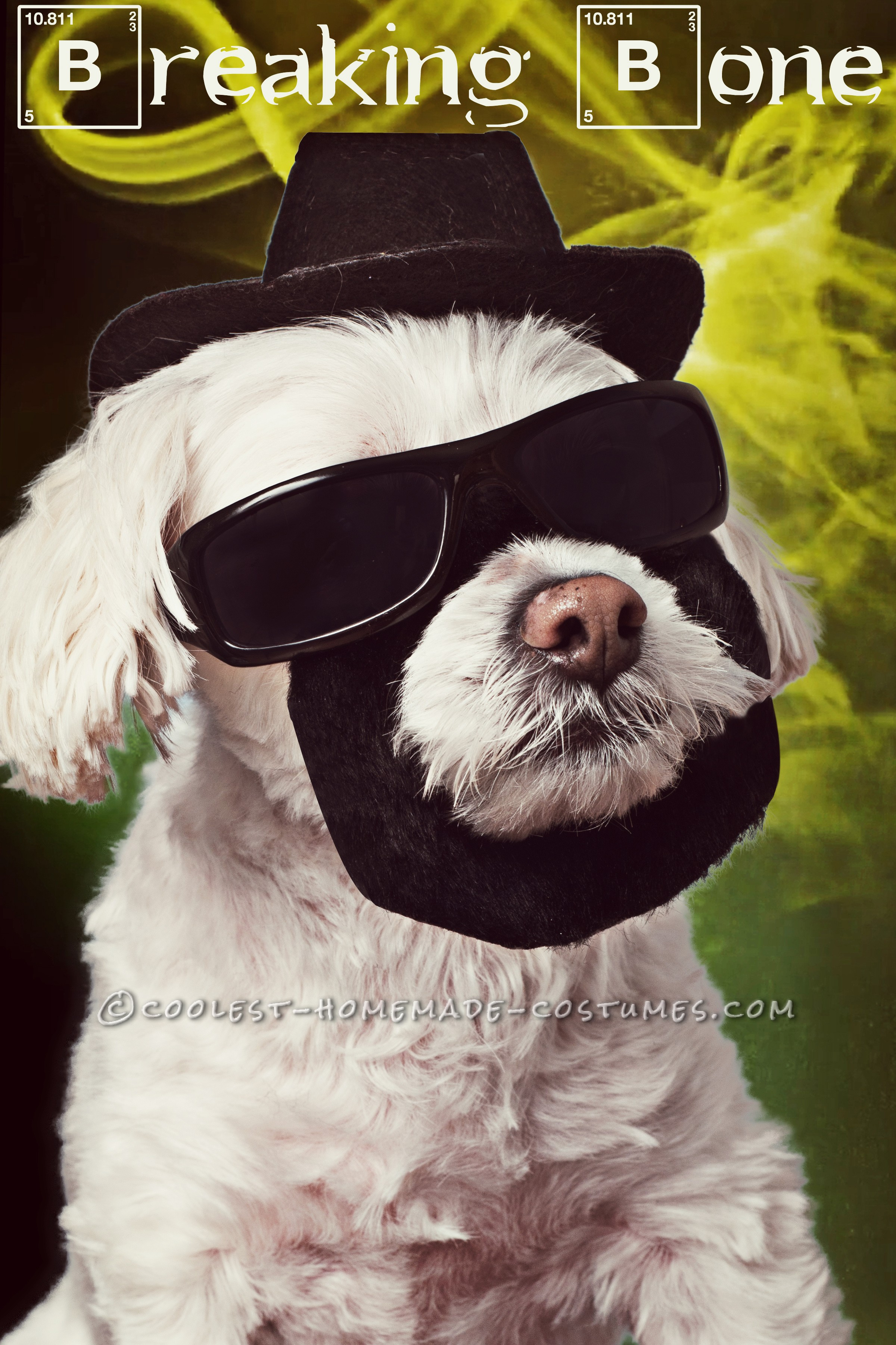 """Easy and Creative """"Breaking Bone"""" Costume for Your Pet"""