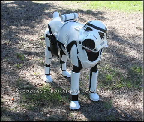 Awesome Stormtrooper Costume for a Dog