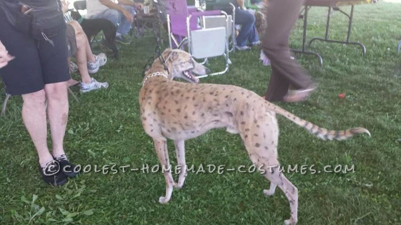 BAM our Dog Transformed into a Cheetah - 2