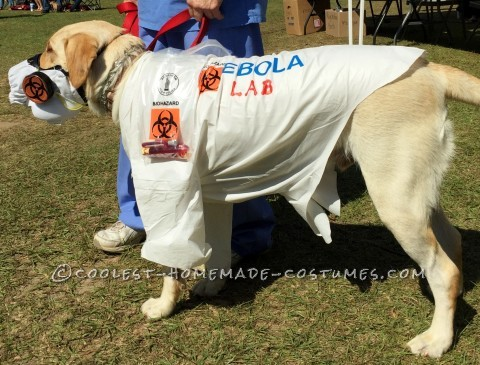 Witty Labrador Retriever Costume: EBOLA LAB