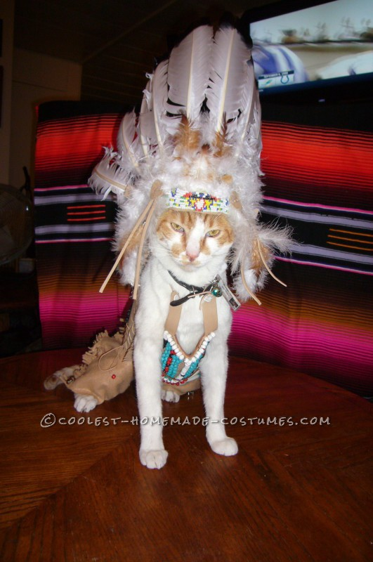 Coolest Indian Costume For a Cat - 5