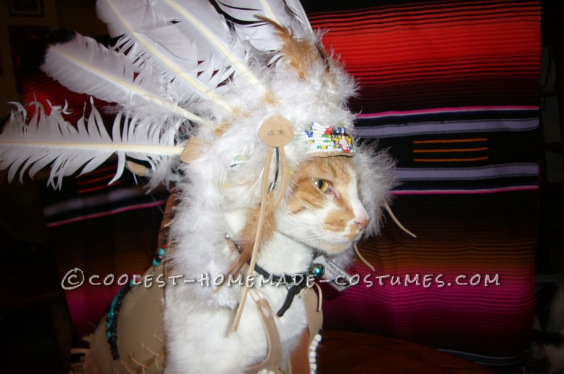 Coolest Indian Costume For a Cat