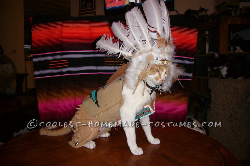 Coolest Indian Costume For a Cat - 1