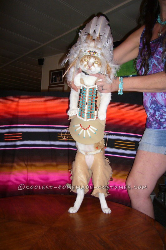 Coolest Indian Costume For a Cat - 4