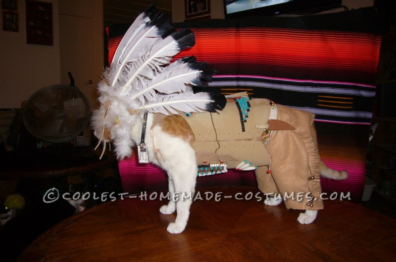 Coolest Indian Costume For a Cat - 3